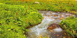 Wie auf natürliche Weise Angst bewältigen? Durch Blockaden im Feinstoffkörper verwirbelt fließt die Lebensenergie wie ein Bach im Gebirge.